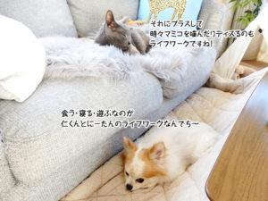 食う・寝る・遊ぶなのが仁くんとにーたんのライフワークなんでち~それにプラスして時々マミコを噛んだりディスるのもライフワークですね!