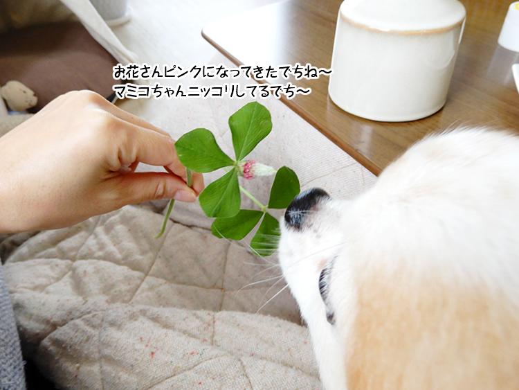 お花さんピンクになってきたでちね~マミコちゃんニッコリしてるでち~