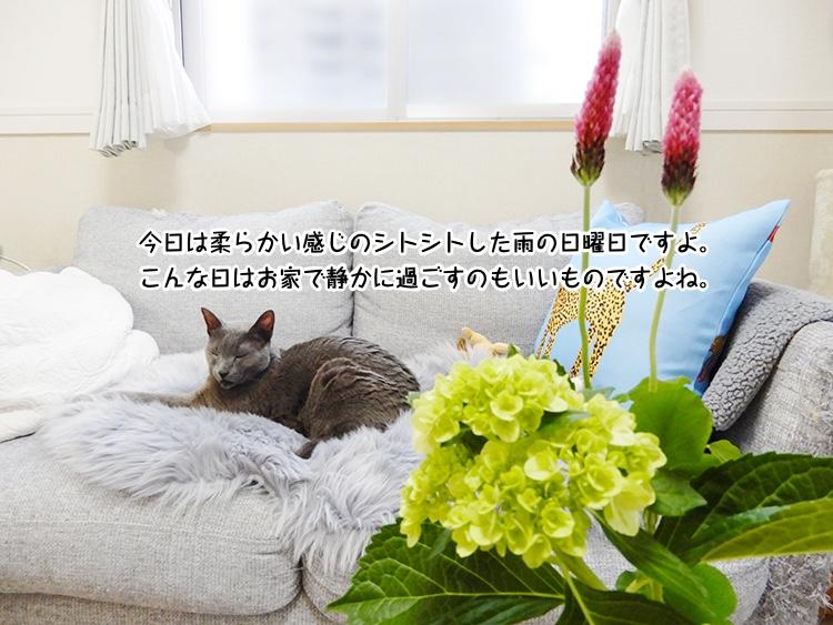 今日は柔らかい感じのシトシトした雨の日曜日ですよ。こんな日はお家で静かに過ごすのもいいものですよね。
