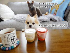 さっきマミコの家から帰ってきたですよ。おやつのプリン食べようでち。