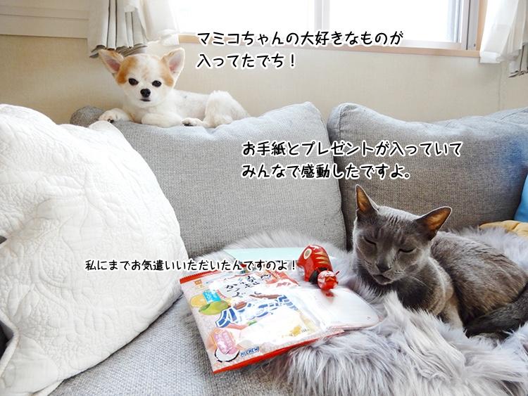 お手紙とプレゼントが入っていてみんなで感動したですよ。マミコ ちゃんの大好きなものが入ってたでちよ!