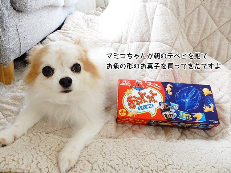 マミコちゃんが朝のテベビを見てお魚の形のお菓子を買ってきたですよ