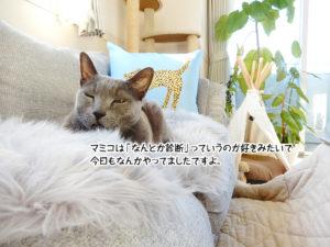 マミコは「なんとか診断」っていうのが好きみたいで今日もなんかやってましたですよ。
