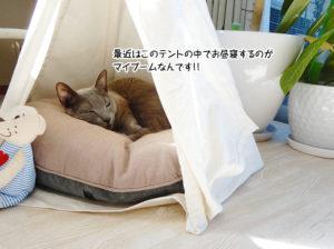 最近はこのテントの中でお昼寝するのがマイブームなんです!!
