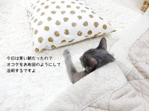 今日は寒い朝だったのでオコタをお布団のようにして活用するですよ