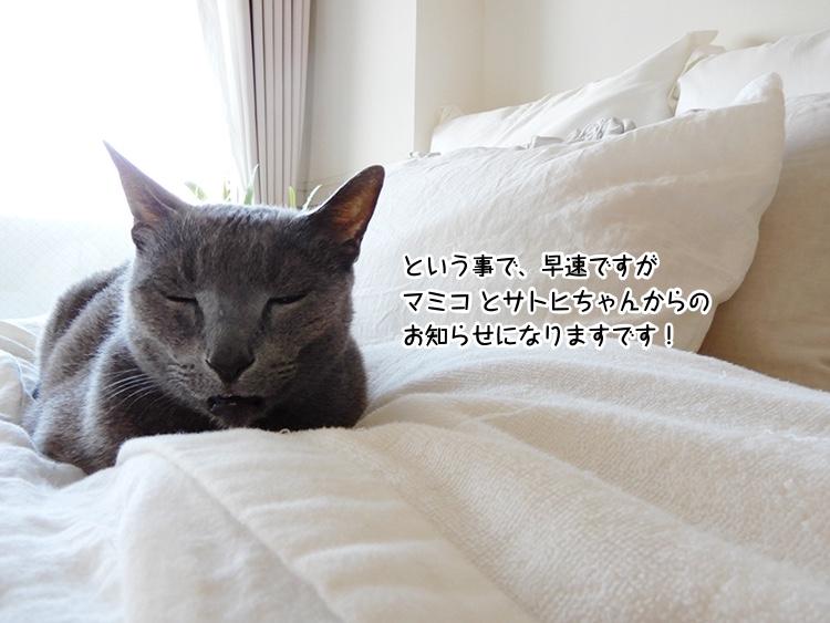 という事で、早速ですがマミコとサトヒちゃんからのお知らせになりますです!
