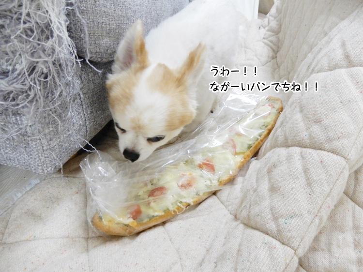 うわー!!ながーいパンでちね!!