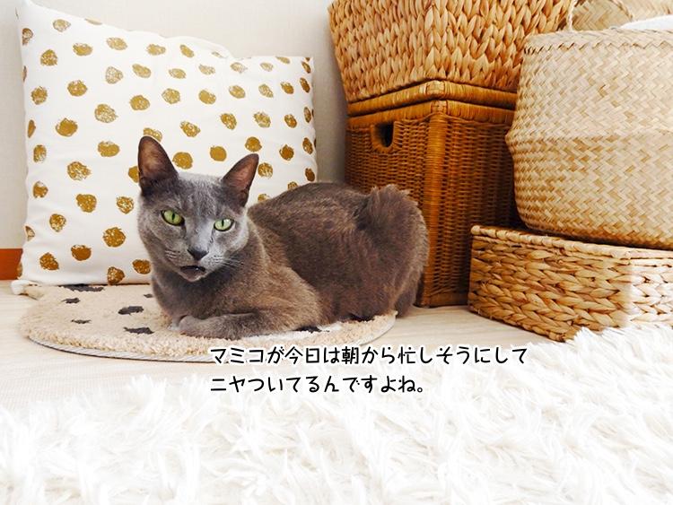 マミコが今日は朝から忙しそうにしてニヤついてるんですよね。