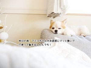 昨日の夜、マミコちゃんがお部屋にマット敷いてIT使って動き出したんでち!