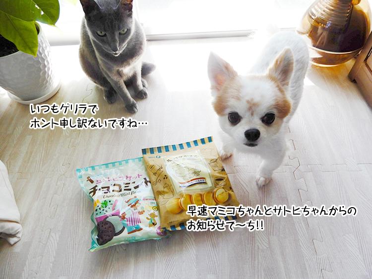 早速マミコちゃんとサトヒちゃんからのお知らせで~ち!!いつもゲリラでホント申し訳ないですね…