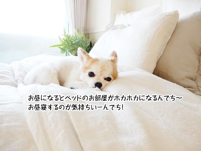 お昼になるとベッドのお部屋がホカホカになるんでち~お昼寝するのが気持ちいーんでち!