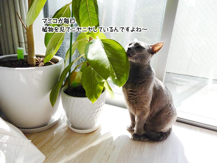 マミコが毎日植物を見てニヤニヤしているんですよね~