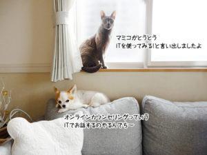 マミコがとうとうITを使ってみる!と言い出しましたよ。オンラインカウンセリングっていうITでお話するのやるんでち~