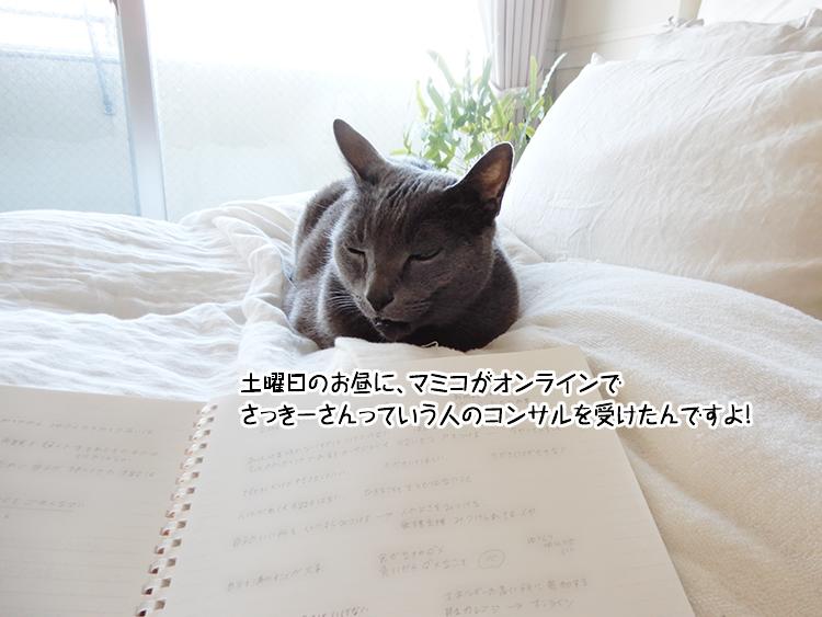 土曜日のお昼に、マミコがオンラインでさっきーさんっていう人のコンサルを受けたんですよ!