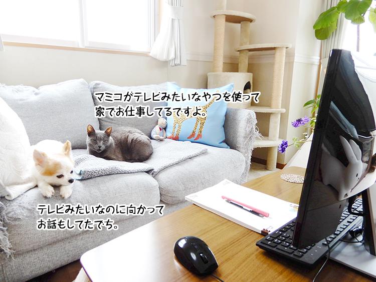 マミコがテレビみたいなやつを使って家でお仕事してるですよ。テレビみたいなのに向かってお話もしてたでち。