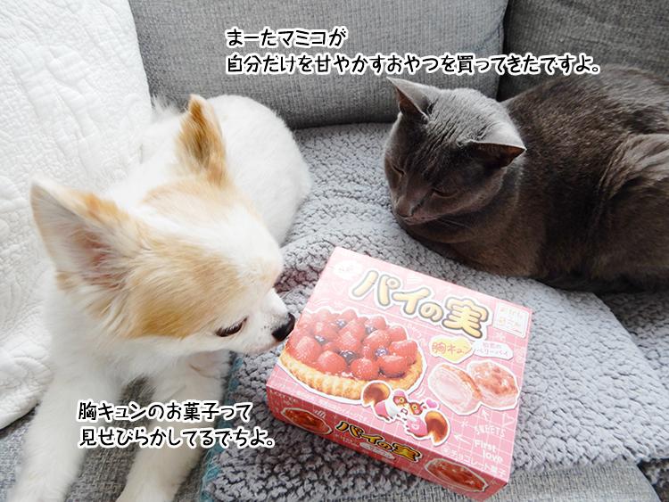 まーたマミコが自分だけを甘やかすおやつを買ってきたですよ。胸キュンのお菓子って見せびらかしてるでちよ。