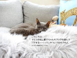 こんにちは。マミコ桐山慶子ちゃんのブログを読んでTTPするーーってニヤついてますですよ。