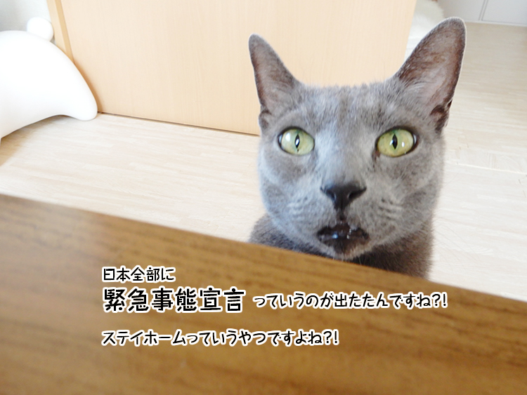 日本全部に緊急事態宣言っていうのが出たたんですね?!ステイホームっていうやつですよね?!