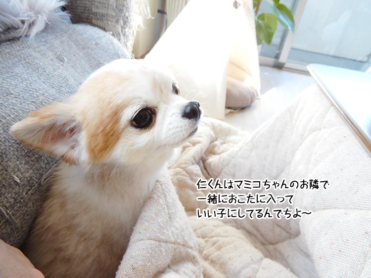 仁くんはマミコちゃんのお隣で 一緒おこたに入っていい子にしてるんでちよ~