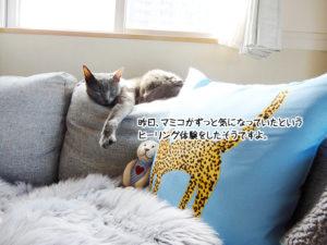 昨日、マミコがずっと気になっていたというヒーリング体験をしたそうですよ。