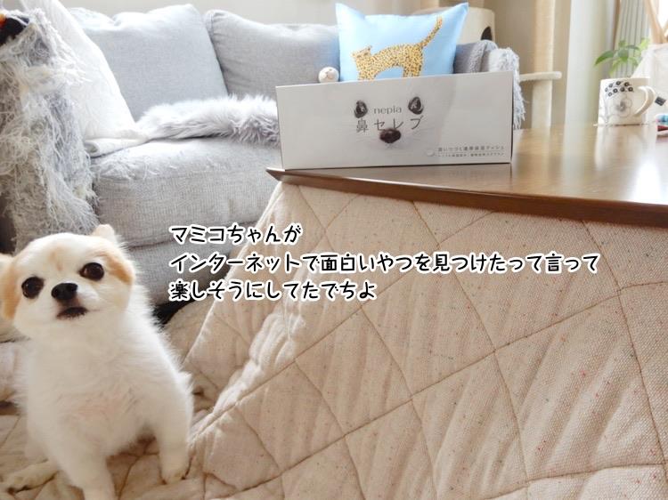 マミコちゃんがインターネットで面白いやつを見つけたって言って楽しそうにしてたでちよ