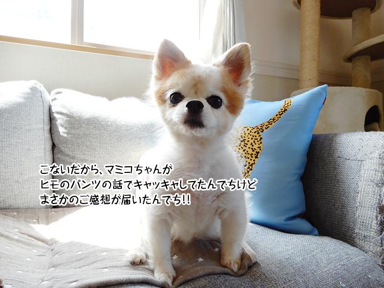 こないだから、マミコちゃんがヒモのパンツの話でキャッキャしてたんでちけどまさかのご感想が届いたんでち!!