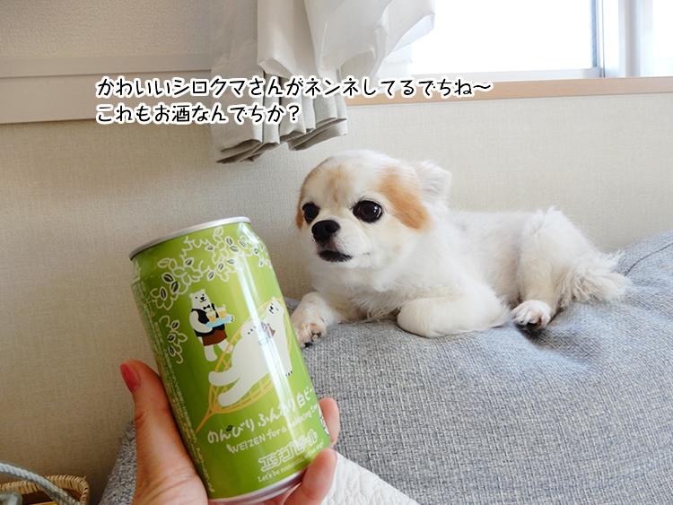 かわいいシロクマさんがネンネしてるでちね~これもお酒なんでちか?