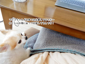 マミコちゃんがお家でお仕事してるでち~仁くんはお隣に座って応援してるんでち!