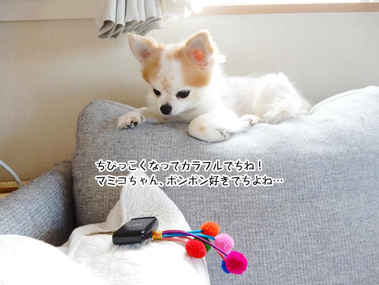 ちびっこくなってカラフルでちね!マミコちゃん、ボンボン好きでちよね…