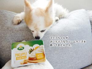 マミコちゃんがおいちそうなクリームチーズを買ってきたんでち。