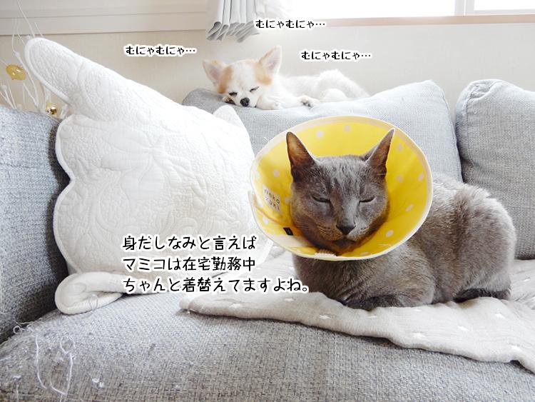 身だしなみと言えばマミコは在宅勤務中ちゃんと着替えてますよね。