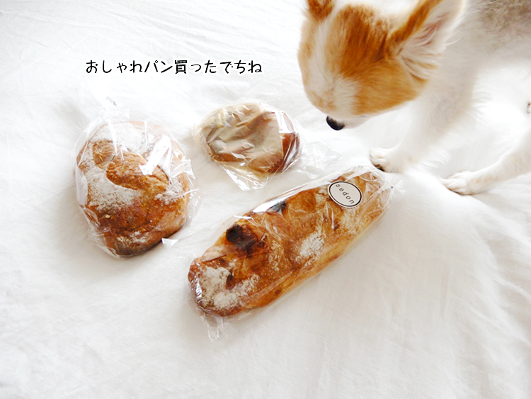 おしゃれパン買ったでちね