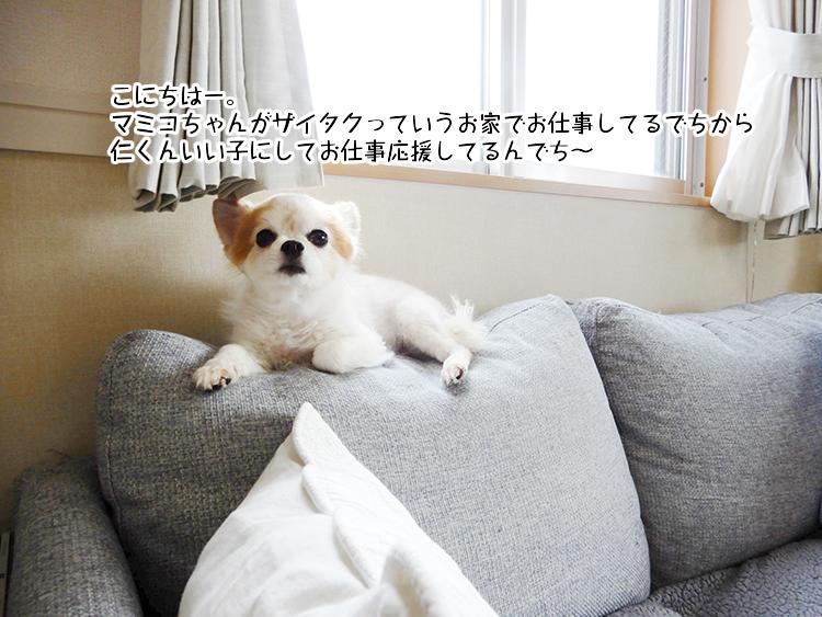こにちはー。マミコちゃんがザイタクっていうお家でお仕事してるでちから仁くんいい子にしてお仕事応援してるんでち~