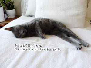 今日はもう夏でしたね。マミコがエアコンつけてくれたですよ。