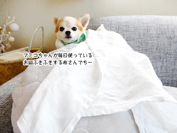 マミコちゃんが毎日使っているお皿ふきふきする布さんでちー