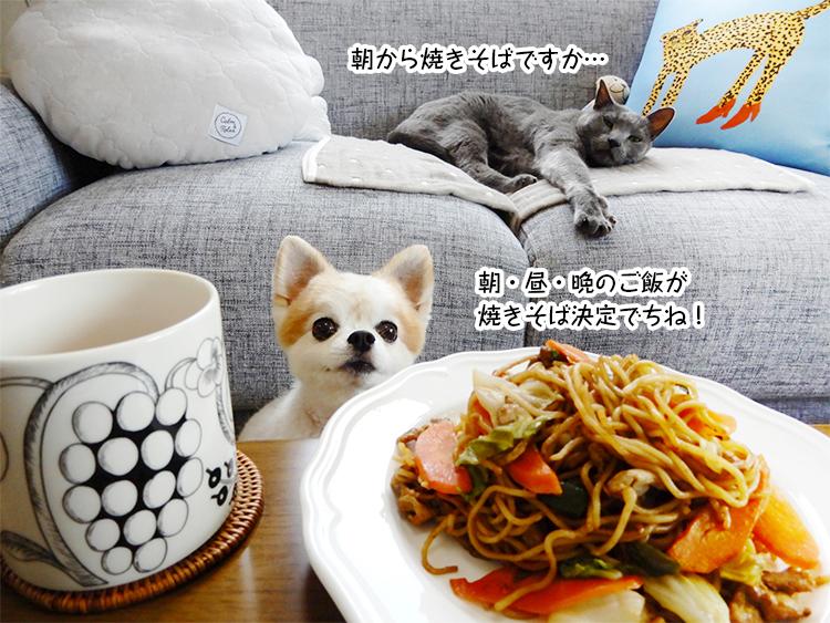 朝から焼きそばですか…朝・昼・晩のご飯が焼きそば決定でちね!
