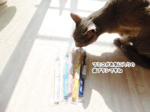マミコのお気に入りの歯ブラシですね