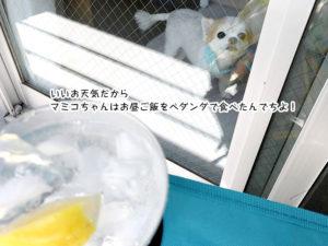 いいお天気だからマミコちゃんがお昼ご飯をベダンダで食べたんでちよ!