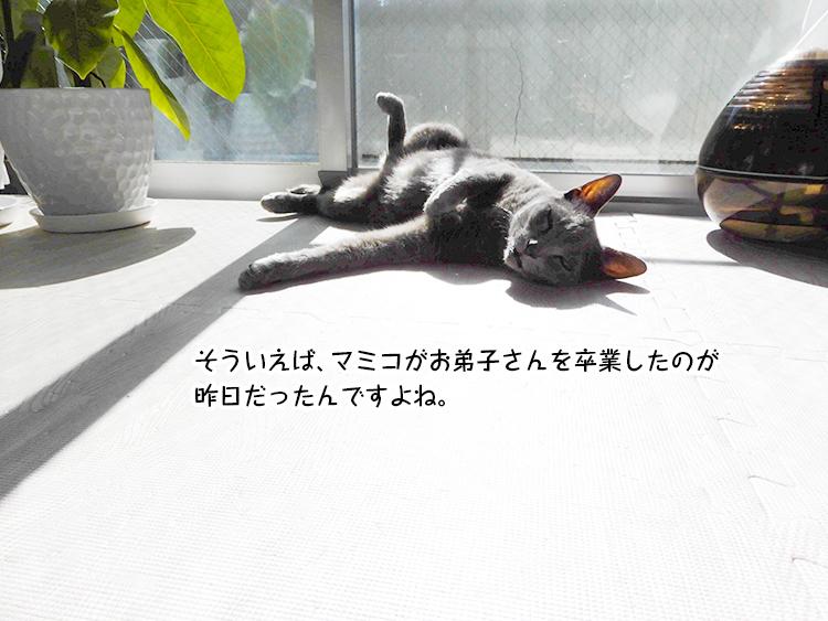 そういえば、マミコがお弟子さんを卒業したのが昨日だったんですよね。