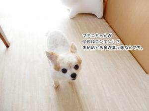 マミコちゃんが今日はエンエンしておめめとお鼻が真っ赤なんでち。