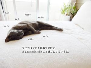 マミコは今日も仕事ですけど オレはのばのばとして過ごしてるですよ。