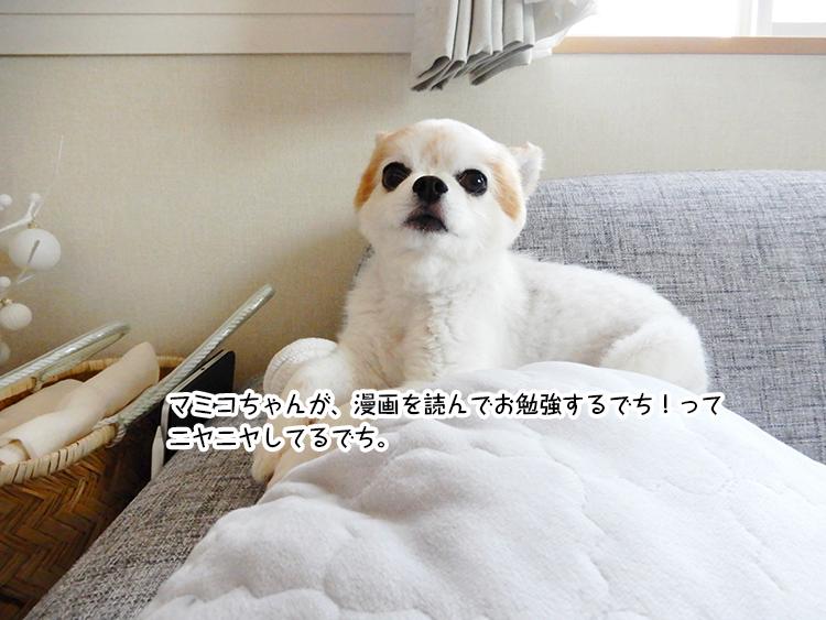 マミコちゃんが、漫画を読んでお勉強するでち!って ニヤニヤしてるでち。