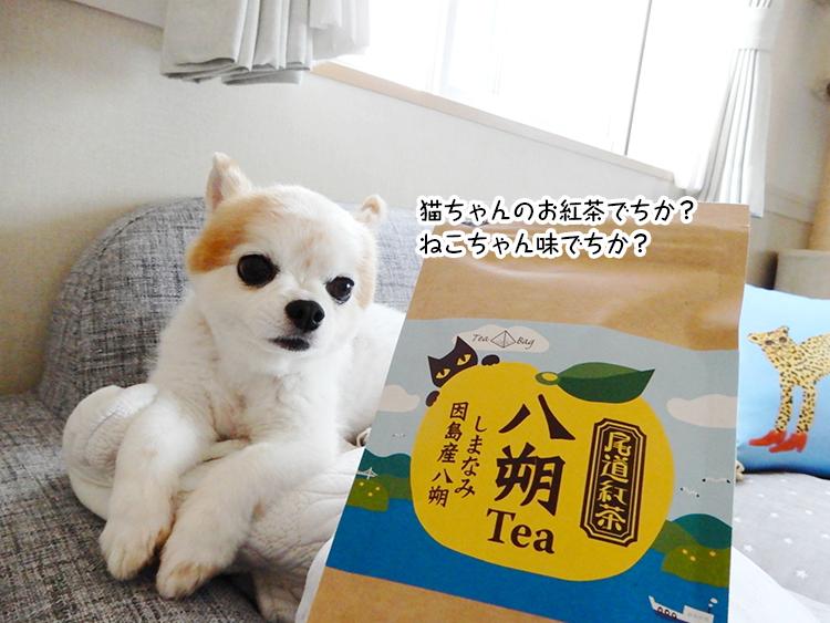 猫ちゃんのお紅茶でちか?ねこちゃん味でちか?