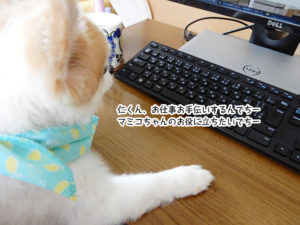仁くん、お仕事お手伝いするんでちーマミコちゃんのお役に立ちたいでちー