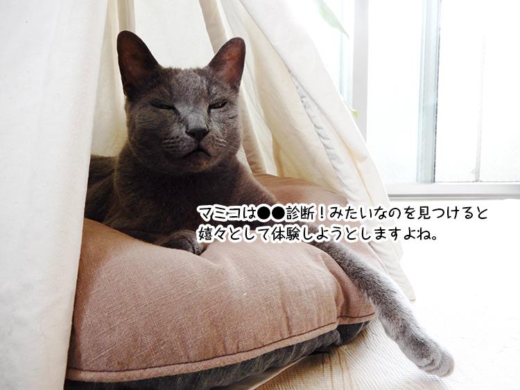 マミコは●●診断!みたいなのを見つけると 嬉々として体験しようとしますよね。