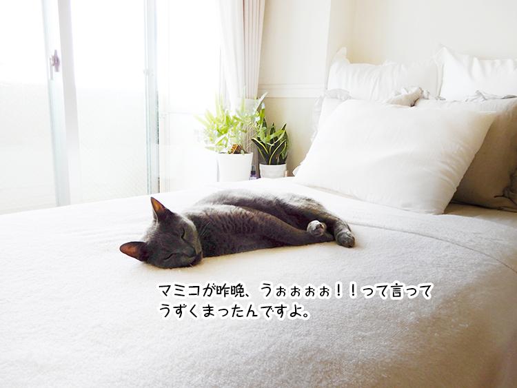 おまみのつぶやき ~光熱費への挑戦~