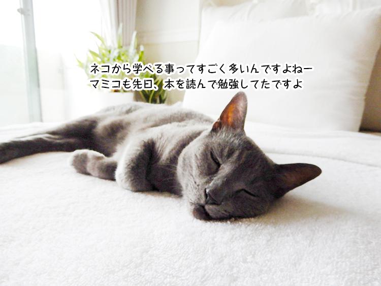 ネコから学べる事ってすごく多いんですよねー マミコも先日、本を読んで勉強してたですよ