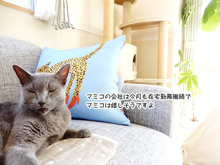 マミコの会社は今月も在宅勤務継続で マミコは嬉しそうですよ