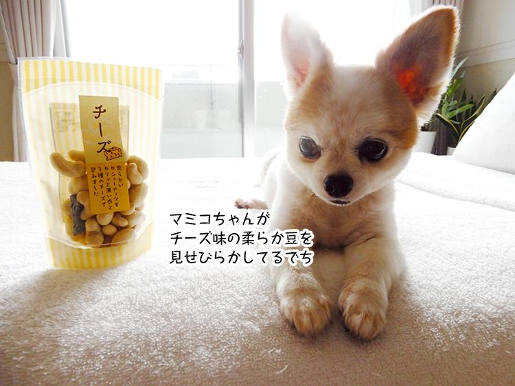 マミコちゃんが チーズ味の柔らか豆を 見せびらかしてるでち