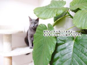 めちゃくちゃ茂ってますよ…もうすぐエアコンに届きそうです。